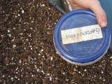 <h5>Seed Storage</h5><p>Seeds need to be shielded from moisture, light and heat, at least until they are ready to grow.</p>