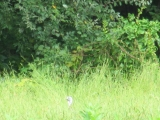 <h5>Wildlife</h5><p>Can you spot the wild animal in this photo from Lundale's lookout fields?</p>